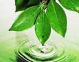 В Удмуртии выбрали шесть районов с благоприятной средой обитания